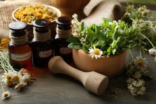 Herbolario cerca de donde estoy – Beneficios de la medicina natural